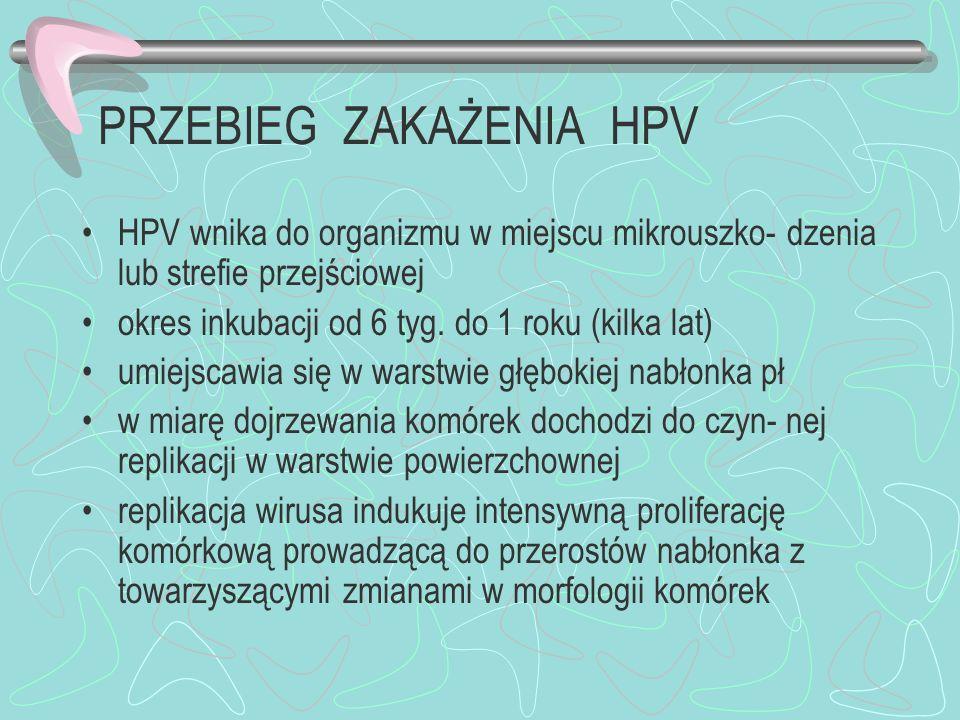 PRZEBIEG ZAKAŻENIA HPV HPV wnika do organizmu w miejscu mikrouszko- dzenia lub strefie przejściowej okres inkubacji od 6 tyg. do 1 roku (kilka lat) um