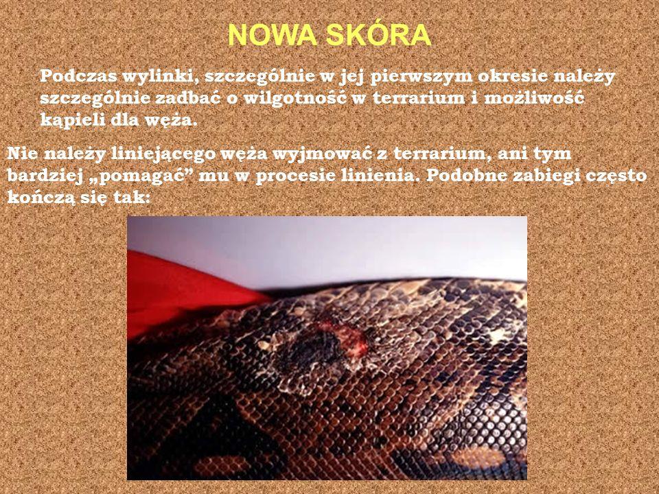 NOWA SKÓRA Podczas wylinki, szczególnie w jej pierwszym okresie należy szczególnie zadbać o wilgotność w terrarium i możliwość kąpieli dla węża. Nie n