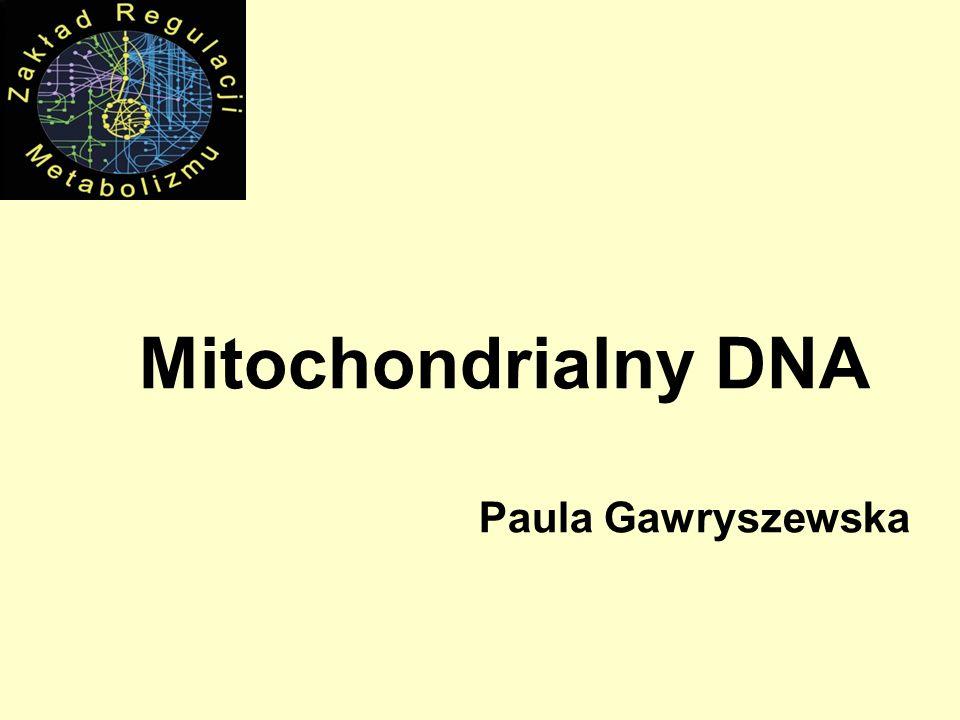 Nature Genetics, 2008 Model generacji delecji mtDNA podczas naprawy DSB