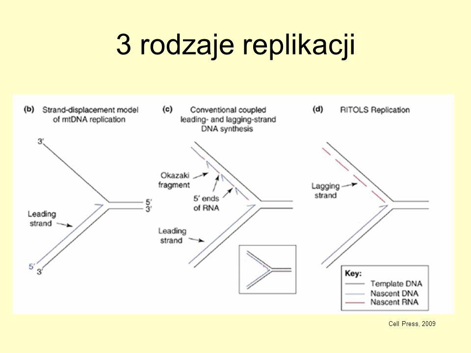 3 rodzaje replikacji Cell Press, 2009