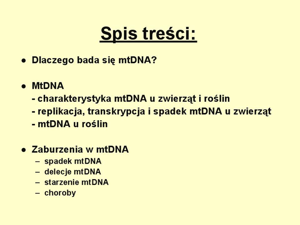 Punktowe mutacje: MELAS - miopatia mitochondrialna, endefalopatia, kwasica mleczanowa, występowanie incydentów podobnych do Udarów.