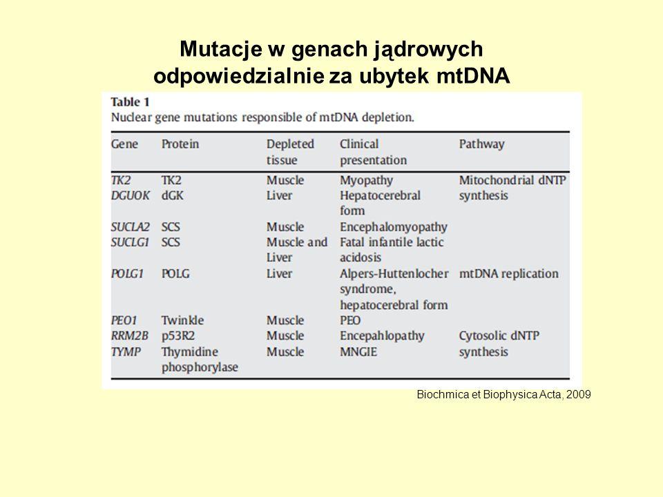 Mutacje w genach jądrowych odpowiedzialnie za ubytek mtDNA Biochmica et Biophysica Acta, 2009