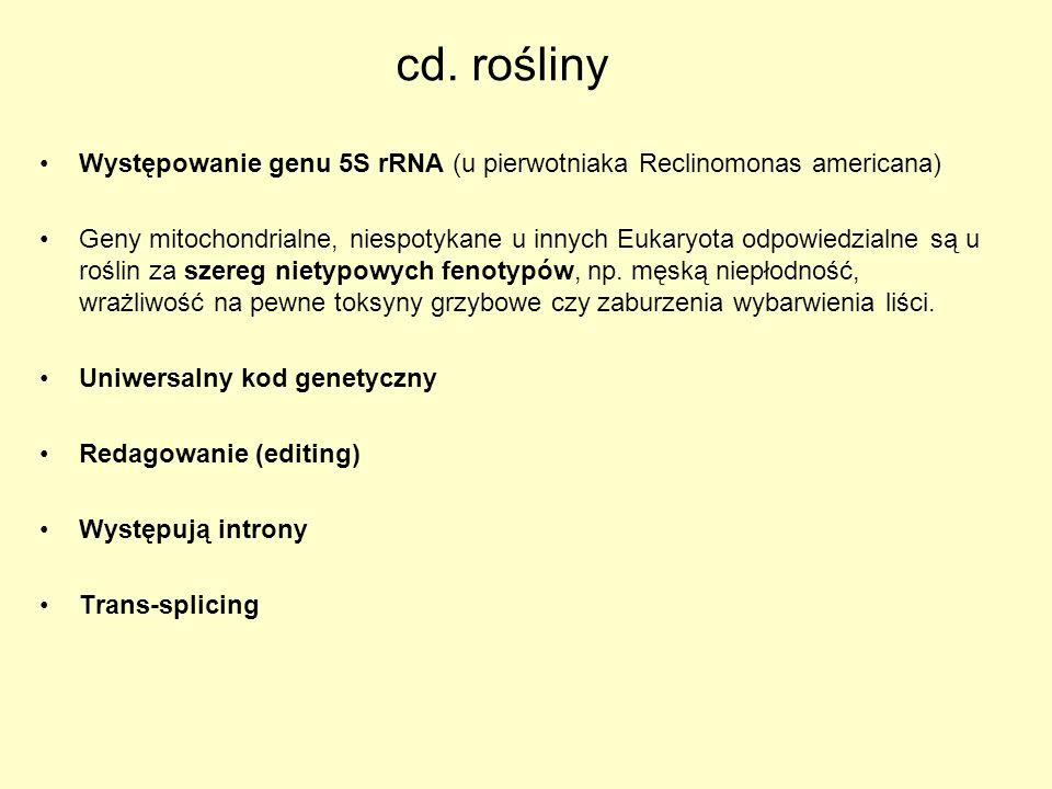 Występowanie genu 5S rRNA (u pierwotniaka Reclinomonas americana) Geny mitochondrialne, niespotykane u innych Eukaryota odpowiedzialne są u roślin za