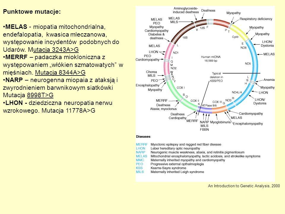 Punktowe mutacje: MELAS - miopatia mitochondrialna, endefalopatia, kwasica mleczanowa, występowanie incydentów podobnych do Udarów. Mutacja 3243A>G ME