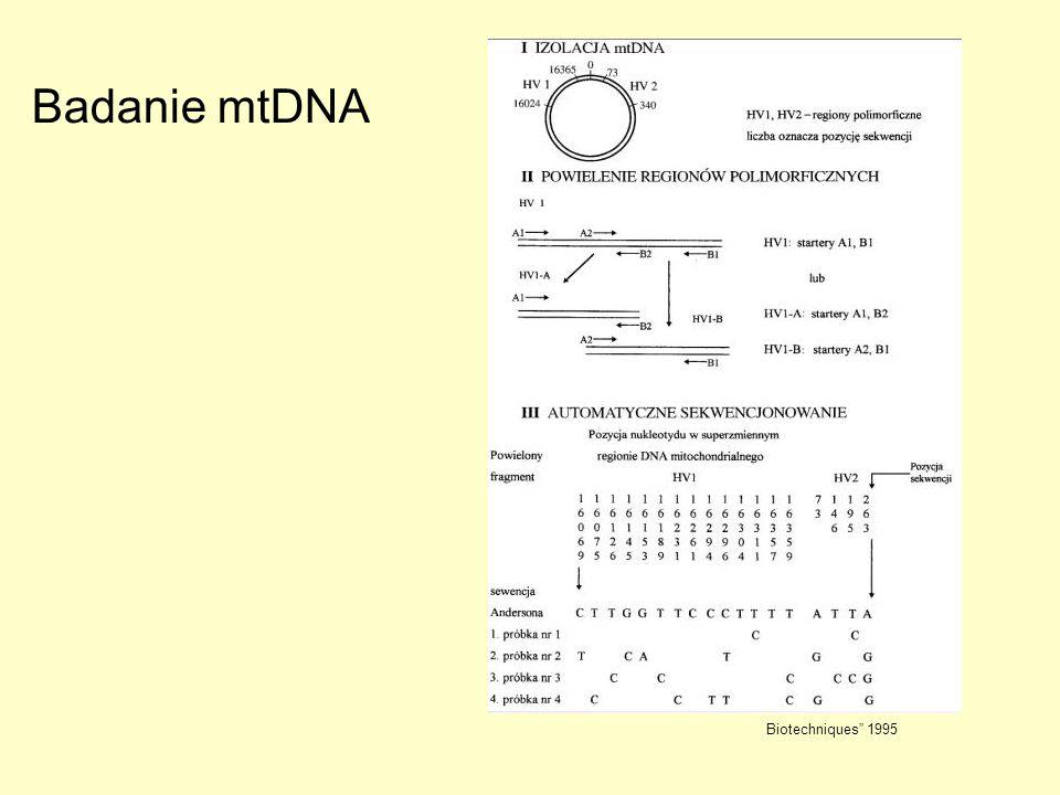 Biotechniques 1995 Badanie mtDNA