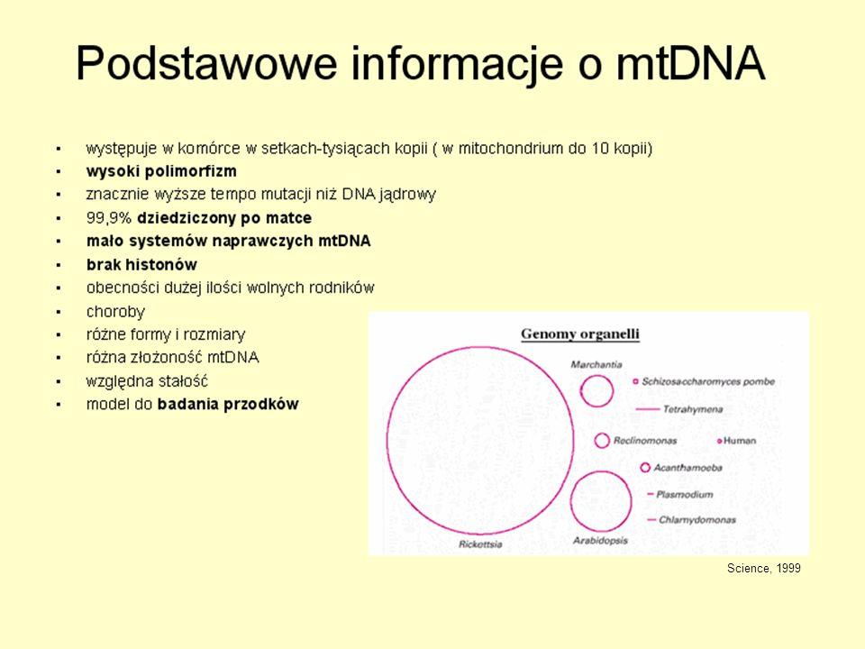 Zwierzęcy a roślinny mtDNA Tabela 1.