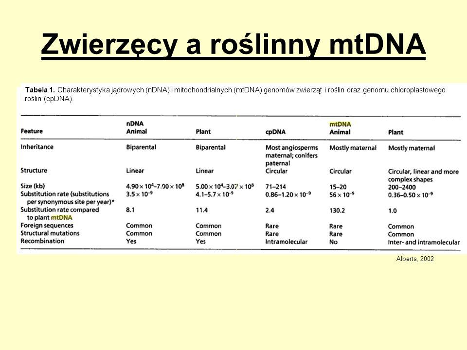 Zwierzęcy a roślinny mtDNA Tabela 1. Charakterystyka jądrowych (nDNA) i mitochondrialnych (mtDNA) genomów zwierząt i roślin oraz genomu chloroplastowe