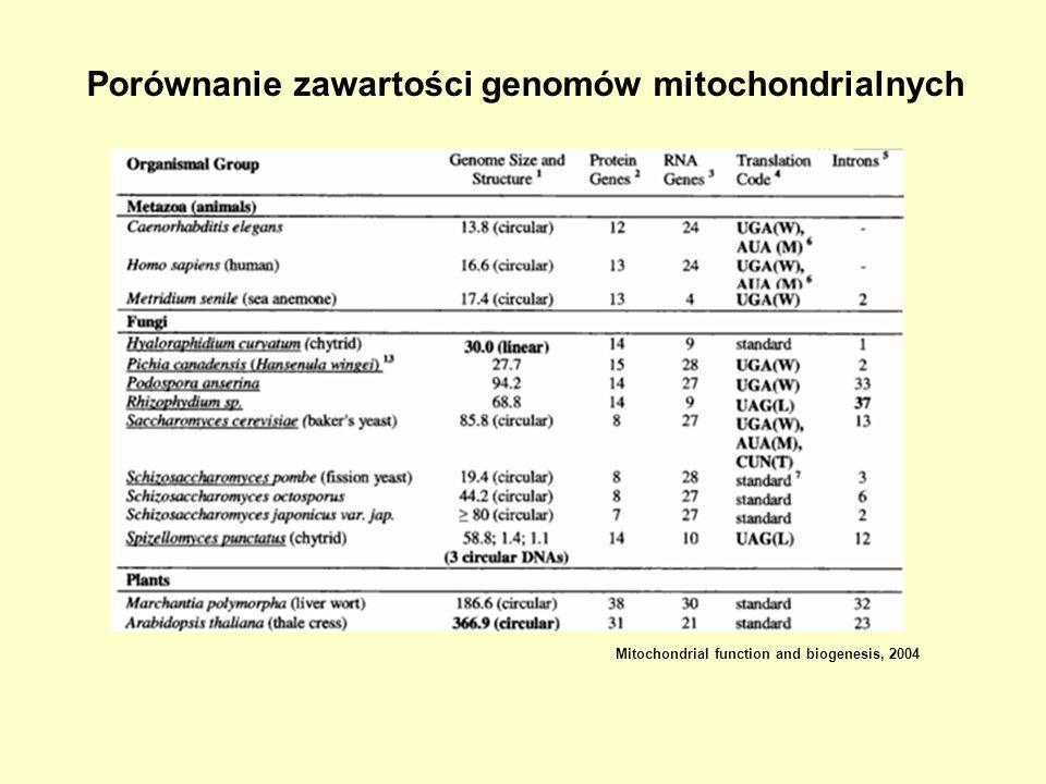 Porównanie zawartości genomów mitochondrialnych Mitochondrial function and biogenesis, 2004