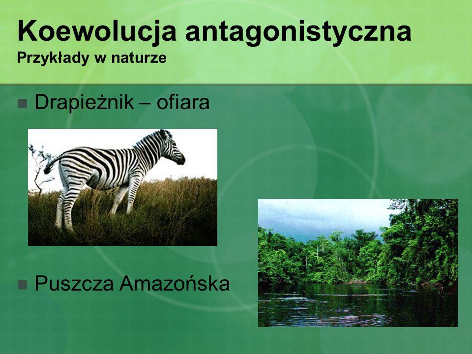 Koewolucja antagonistyczna Przykłady w naturze Drapieżnik – ofiara Puszcza Amazońska
