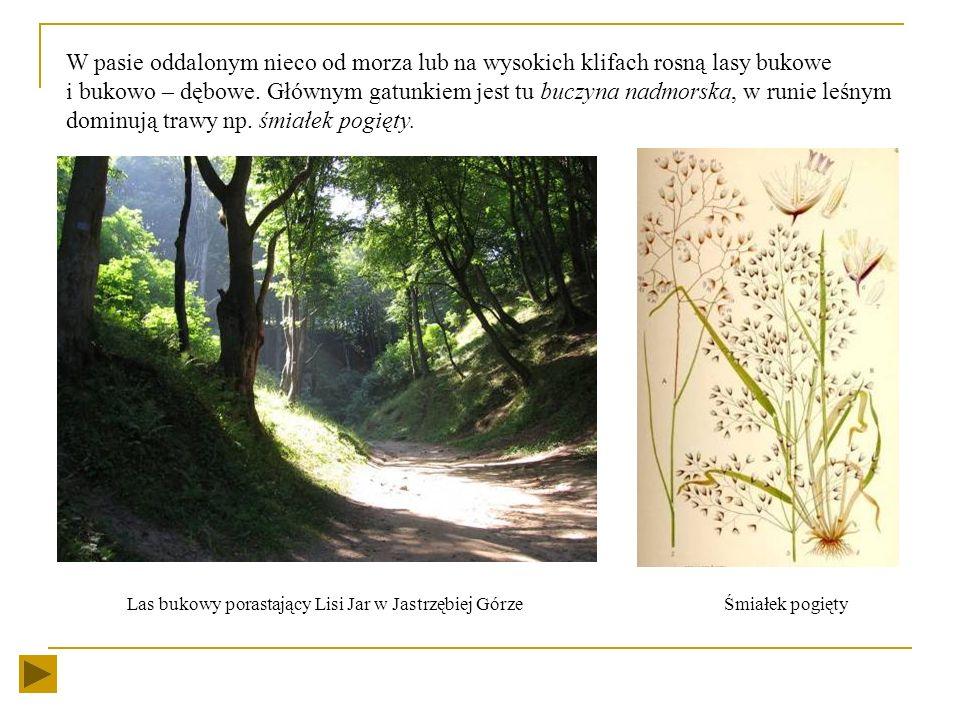 Roślinność Występują tu sosnowe bory nadmorskie tzw. bory bażynowe, (charakterystyczne rośliny to: bażyna czarna, turzyca piaskowa, wierzba piaskowa).