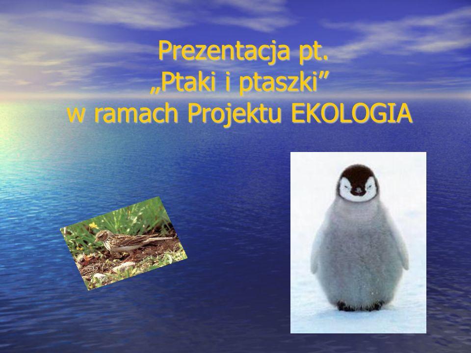 Prezentacja pt. Ptaki i ptaszki w ramach Projektu EKOLOGIA Prezentacja pt. Ptaki i ptaszki w ramach Projektu EKOLOGIA