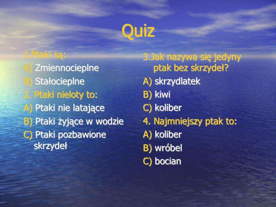 Quiz 1.Ptaki są: A) Zmiennocieplne B) Stałocieplne 2. Ptaki nieloty to: A) Ptaki nie latające B) Ptaki żyjące w wodzie C) Ptaki pozbawione skrzydeł 3.
