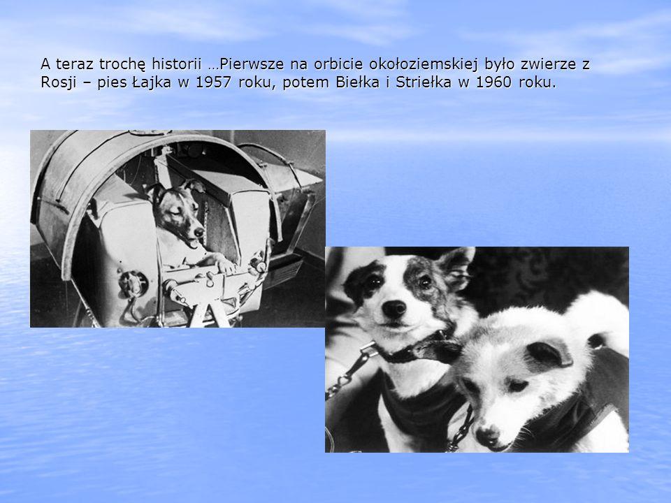 A teraz trochę historii …Pierwsze na orbicie okołoziemskiej było zwierze z Rosji – pies Łajka w 1957 roku, potem Biełka i Striełka w 1960 roku.