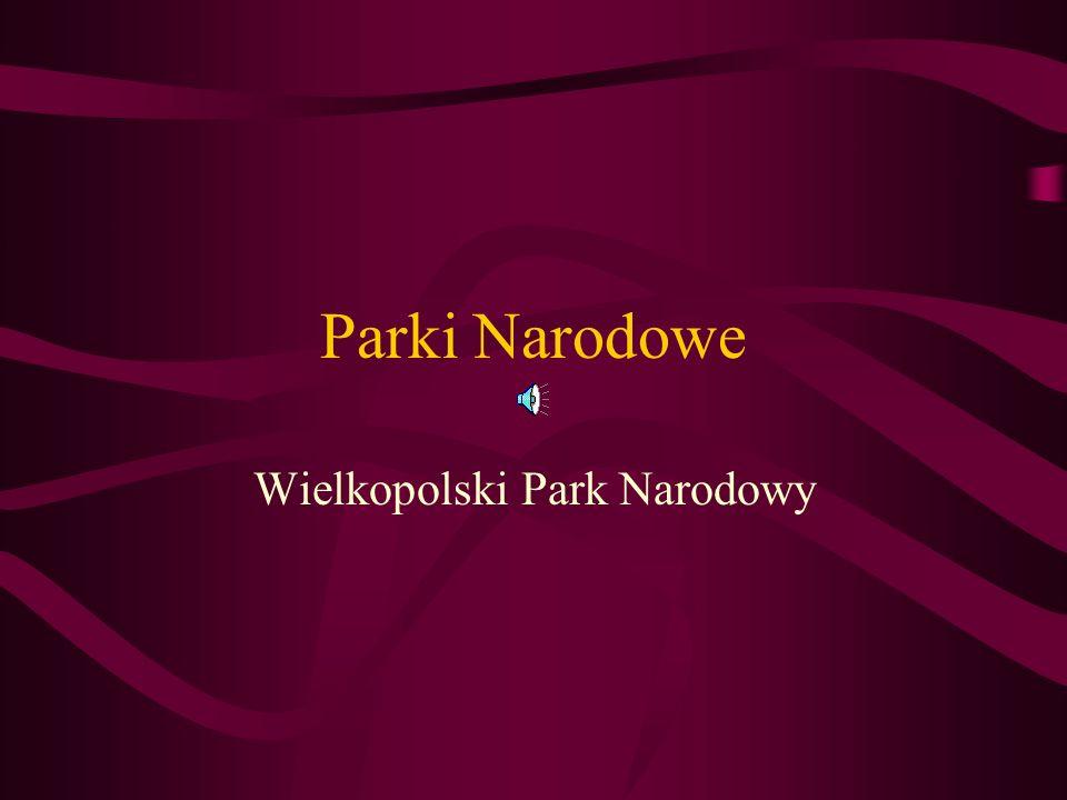 Parki Narodowe Wielkopolski Park Narodowy