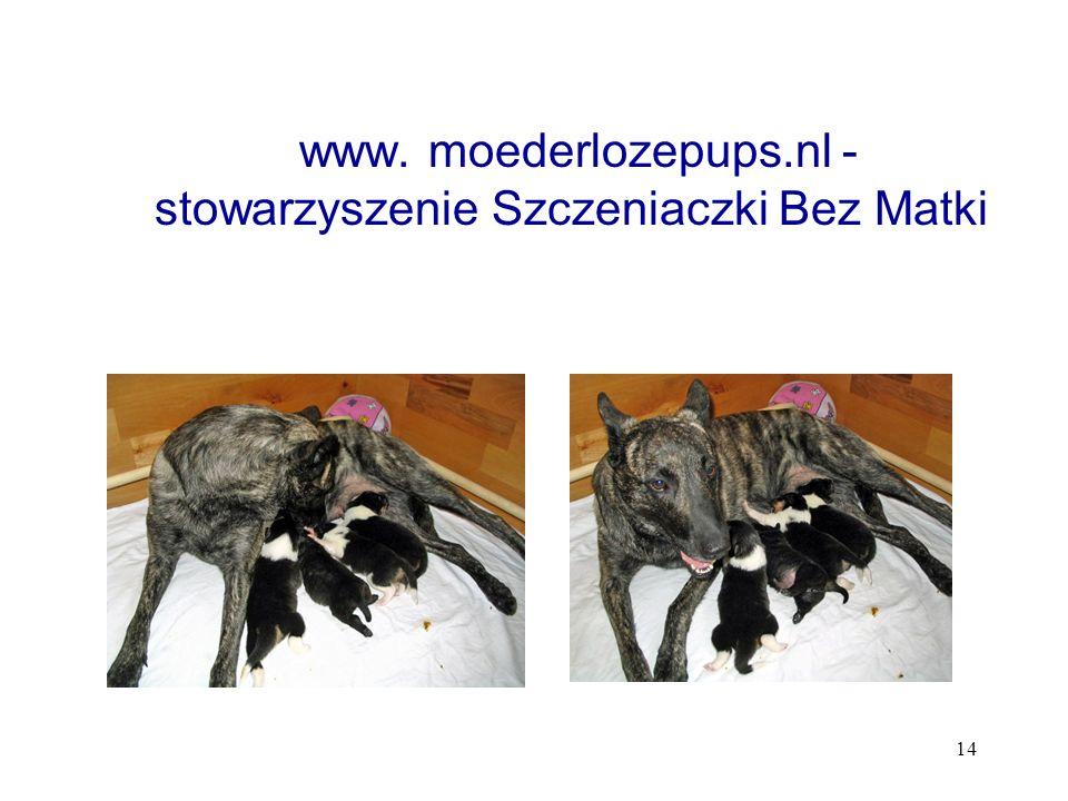 14 www. moederlozepups.nl - stowarzyszenie Szczeniaczki Bez Matki