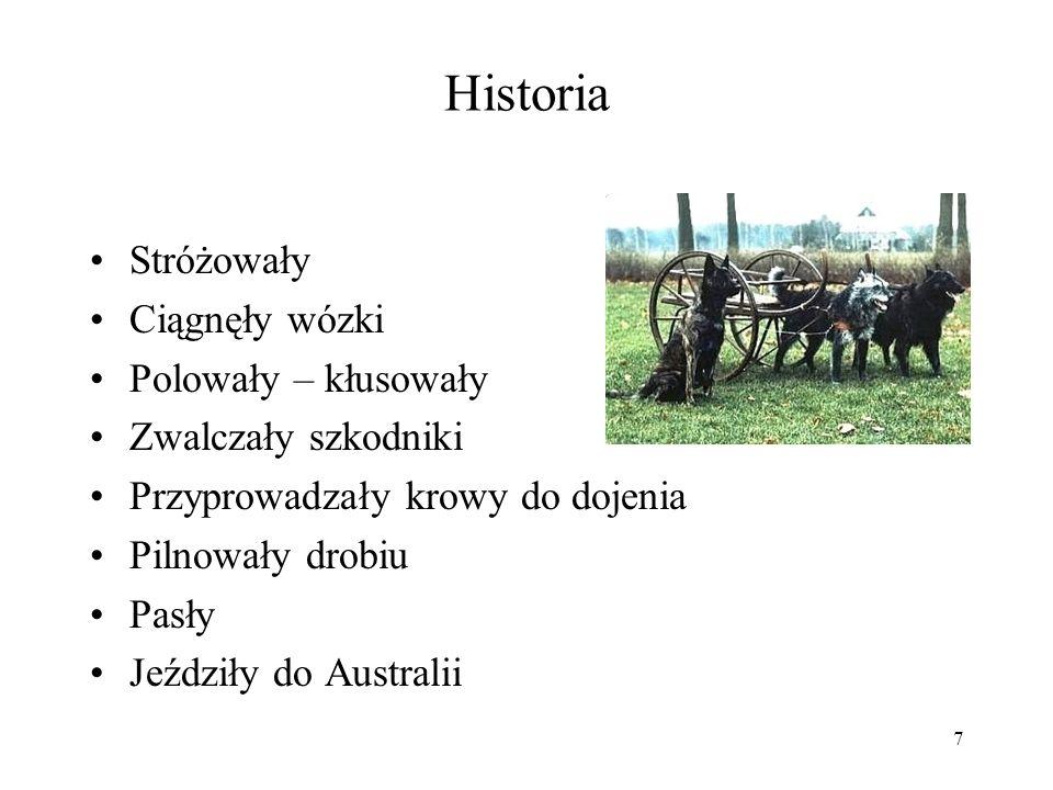 7 Historia Stróżowały Ciągnęły wózki Polowały – kłusowały Zwalczały szkodniki Przyprowadzały krowy do dojenia Pilnowały drobiu Pasły Jeździły do Austr