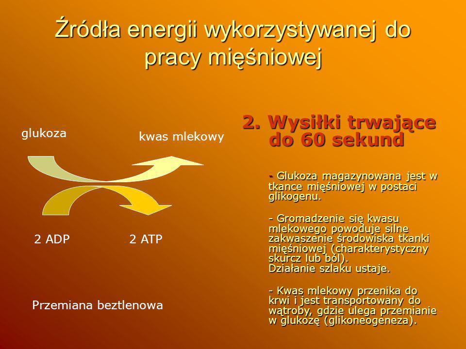 Źródła energii wykorzystywanej do pracy mięśniowej 2. Wysiłki trwające do 60 sekund - Glukoza magazynowana jest w tkance mięśniowej w postaci glikogen
