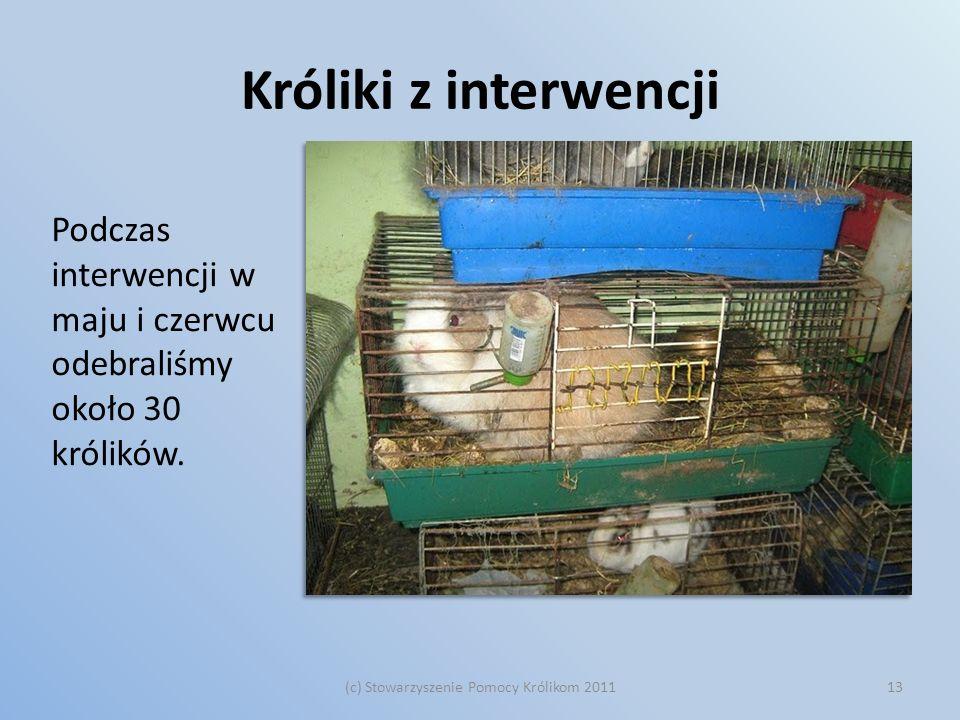 Króliki z interwencji Podczas interwencji w maju i czerwcu odebraliśmy około 30 królików. (c) Stowarzyszenie Pomocy Królikom 201113