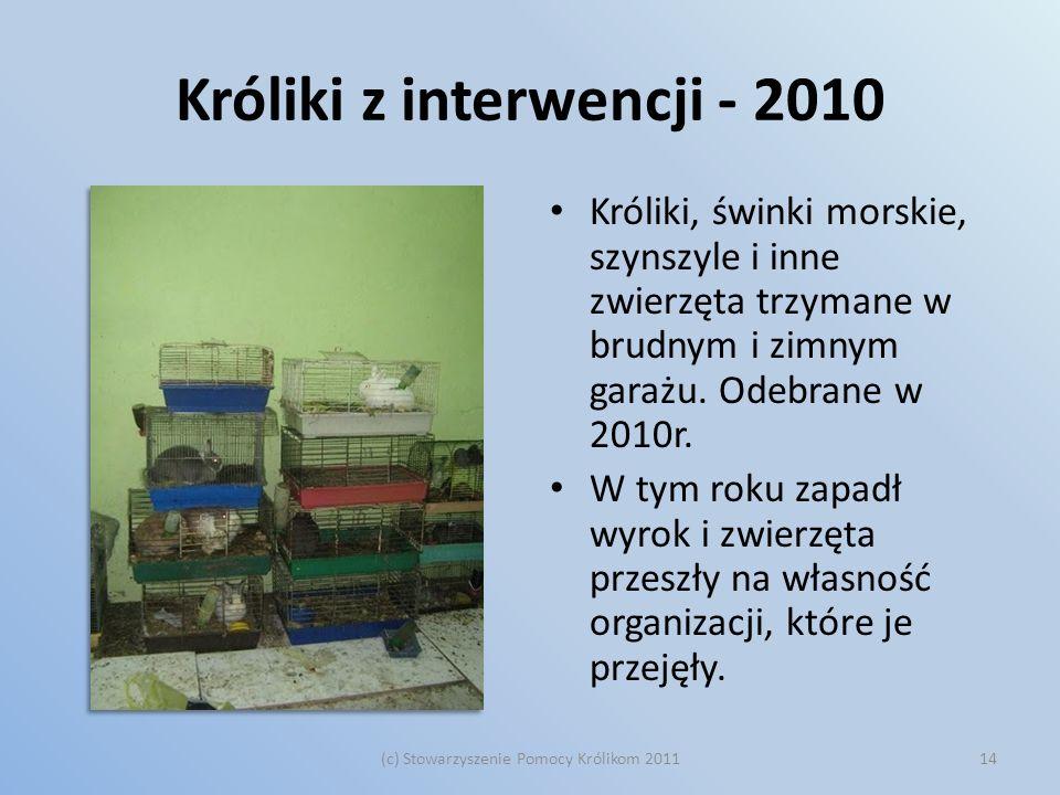 Króliki z interwencji - 2010 Króliki, świnki morskie, szynszyle i inne zwierzęta trzymane w brudnym i zimnym garażu. Odebrane w 2010r. W tym roku zapa