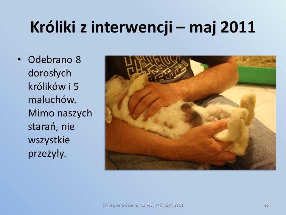Króliki z interwencji – maj 2011 Odebrano 8 dorosłych królików i 5 maluchów. Mimo naszych starań, nie wszystkie przeżyły. (c) Stowarzyszenie Pomocy Kr