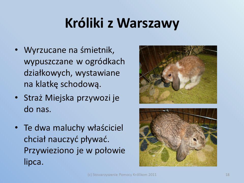 Króliki z Warszawy Wyrzucane na śmietnik, wypuszczane w ogródkach działkowych, wystawiane na klatkę schodową. Straż Miejska przywozi je do nas. Te dwa