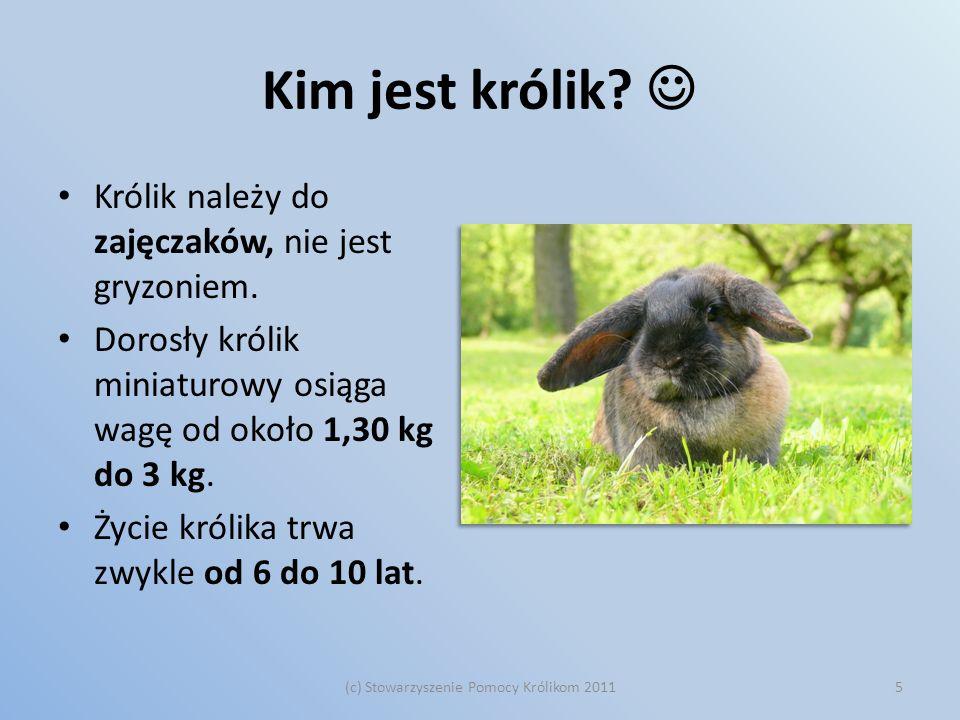 Kim jest królik? Królik należy do zajęczaków, nie jest gryzoniem. Dorosły królik miniaturowy osiąga wagę od około 1,30 kg do 3 kg. Życie królika trwa
