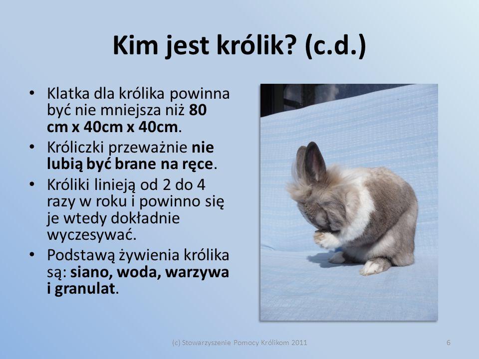 Kim jest królik? (c.d.) Klatka dla królika powinna być nie mniejsza niż 80 cm x 40cm x 40cm. Króliczki przeważnie nie lubią być brane na ręce. Króliki