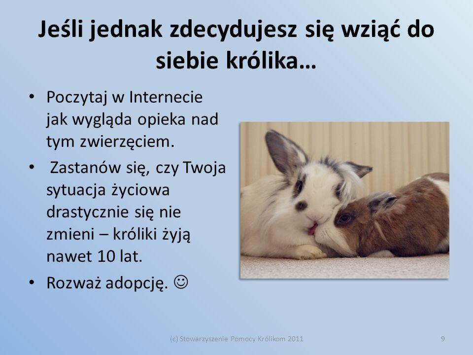 Jeśli jednak zdecydujesz się wziąć do siebie królika… Poczytaj w Internecie jak wygląda opieka nad tym zwierzęciem. Zastanów się, czy Twoja sytuacja ż