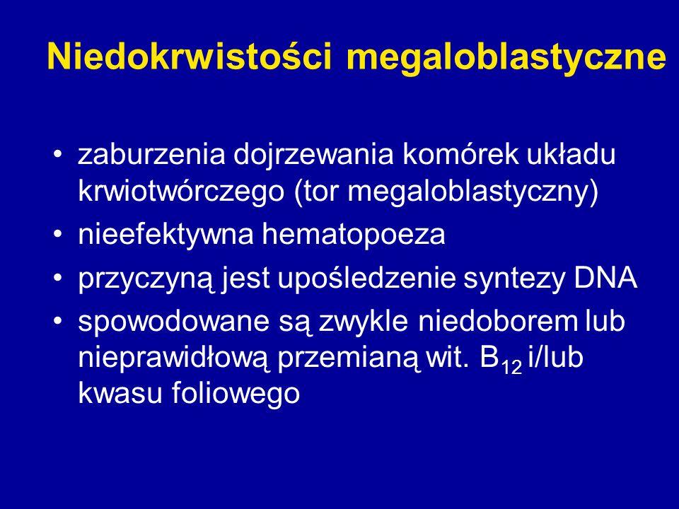 Niedokrwistości megaloblastyczne zaburzenia dojrzewania komórek układu krwiotwórczego (tor megaloblastyczny) nieefektywna hematopoeza przyczyną jest u