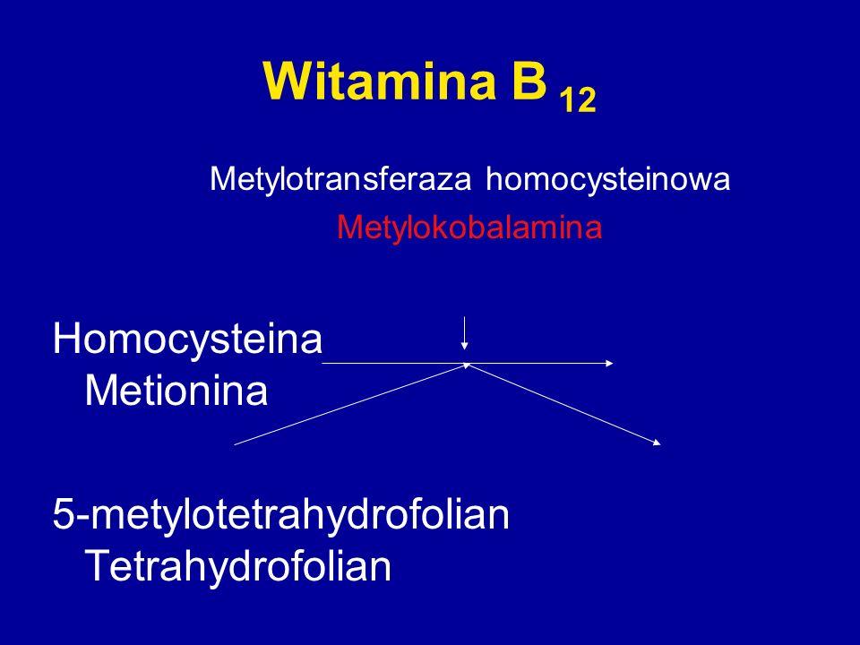 Witamina B 12 Metylotransferaza homocysteinowa Metylokobalamina Homocysteina Metionina 5-metylotetrahydrofolian Tetrahydrofolian