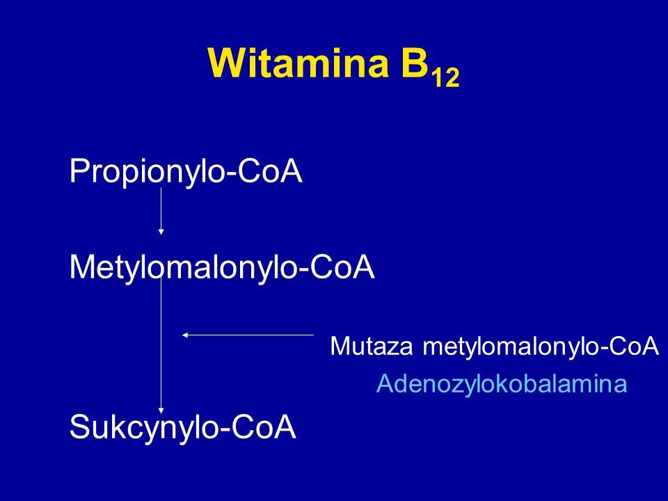 Witamina B 12 Propionylo-CoA Metylomalonylo-CoA Mutaza metylomalonylo-CoA Adenozylokobalamina Sukcynylo-CoA