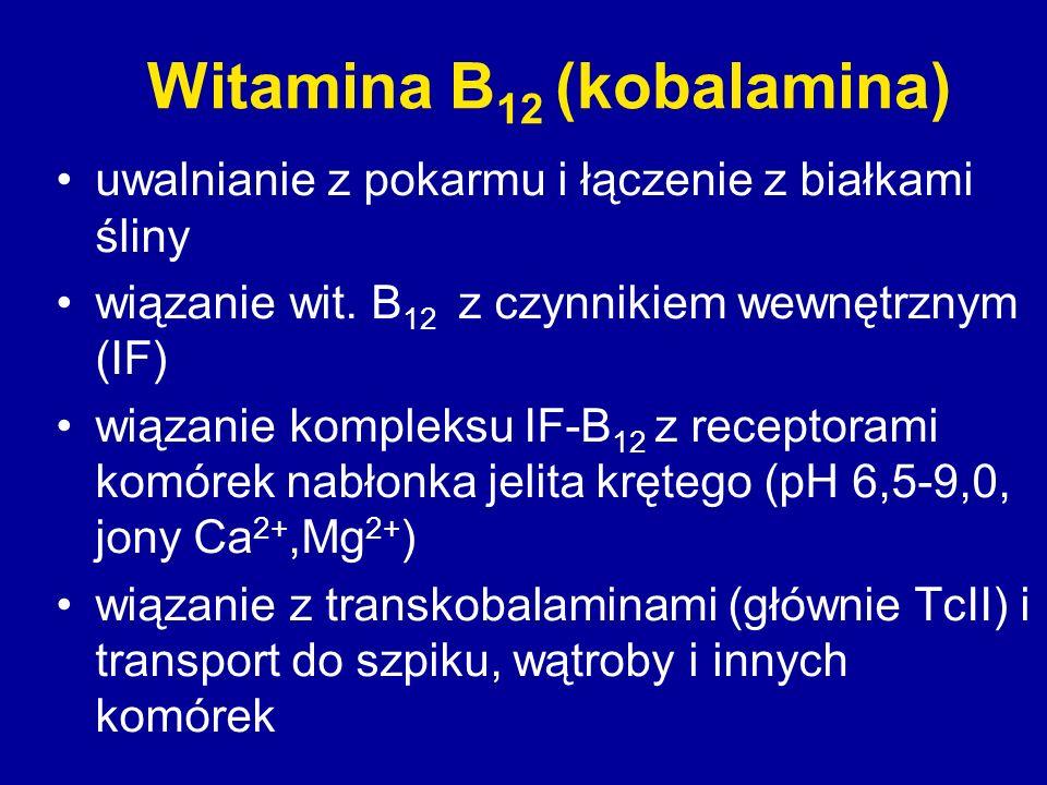 Witamina B 12 (kobalamina) uwalnianie z pokarmu i łączenie z białkami śliny wiązanie wit. B 12 z czynnikiem wewnętrznym (IF) wiązanie kompleksu IF-B 1