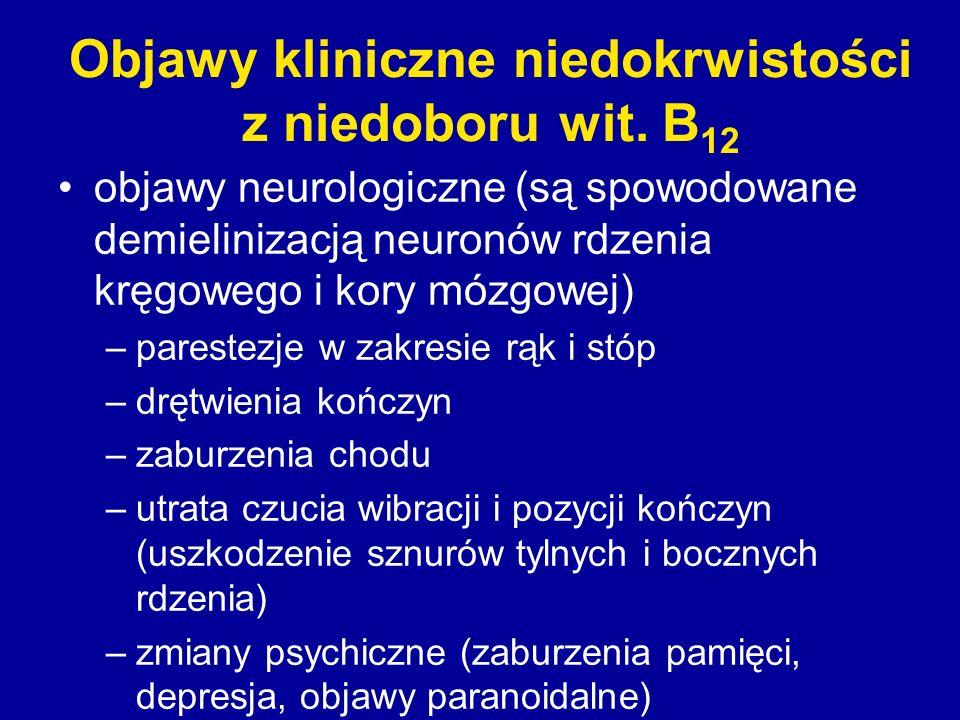 Objawy kliniczne niedokrwistości z niedoboru wit. B 12 objawy neurologiczne (są spowodowane demielinizacją neuronów rdzenia kręgowego i kory mózgowej)