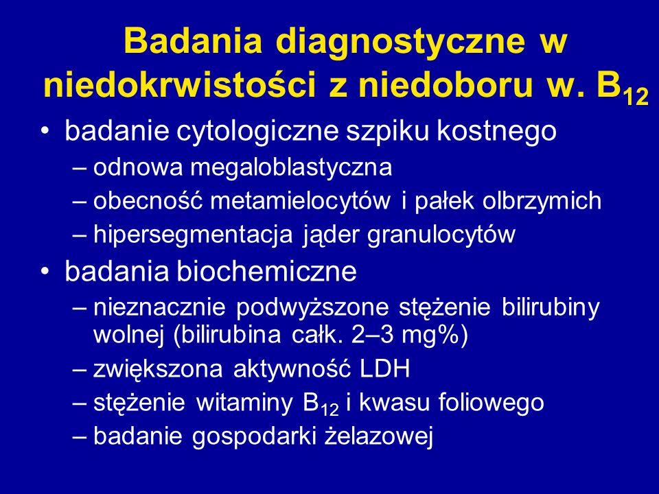 Badania diagnostyczne w niedokrwistości z niedoboru w. B 12 badanie cytologiczne szpiku kostnego –odnowa megaloblastyczna –obecność metamielocytów i p