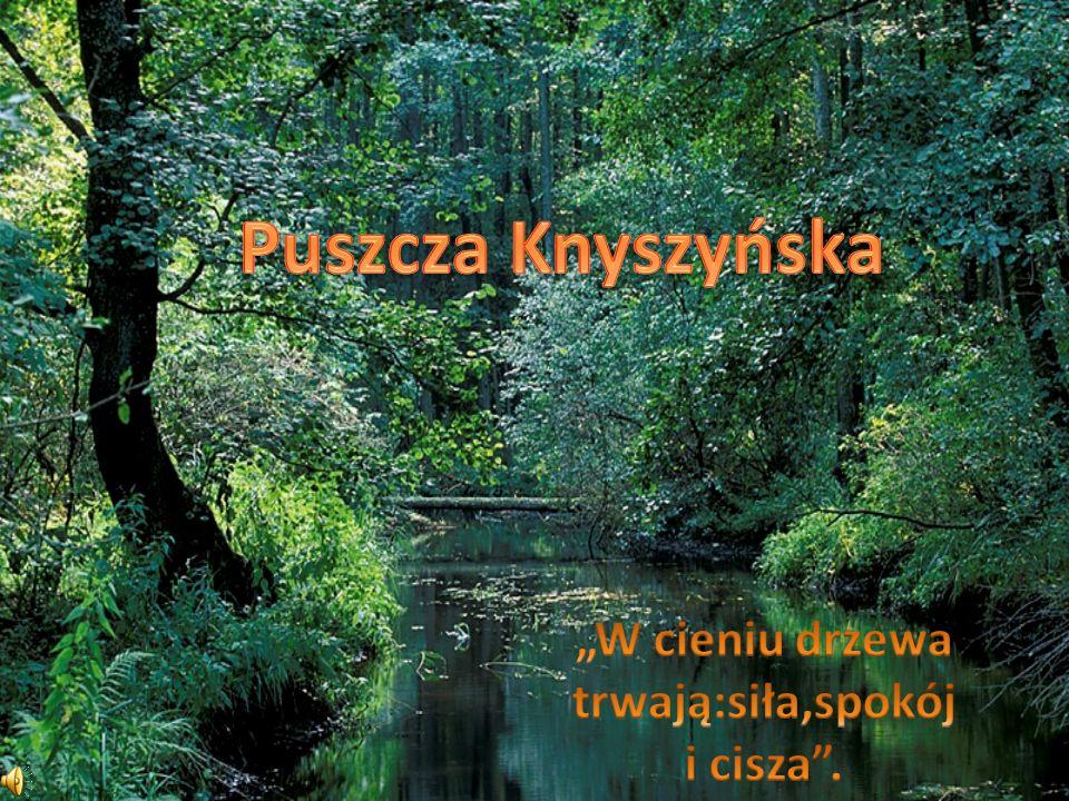 Obszar przecina rzeka Supraśl z dopływami: Sokołdą, Słoją i Płoską.
