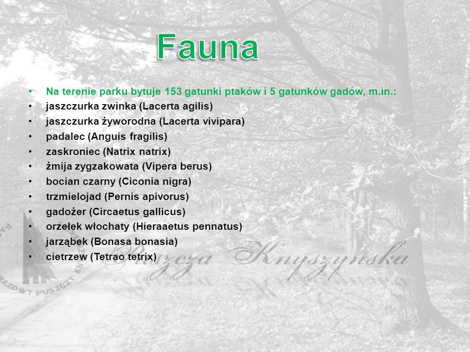 Na terenie parku bytuje 153 gatunki ptaków i 5 gatunków gadów, m.in.: jaszczurka zwinka (Lacerta agilis) jaszczurka żyworodna (Lacerta vivipara) padal