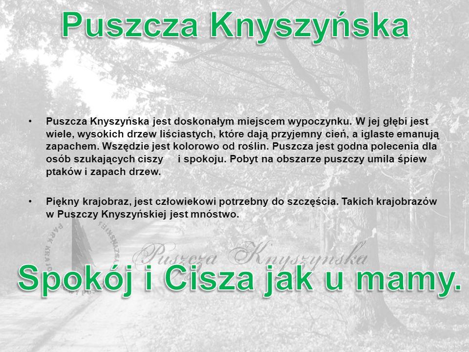 Puszcza Knyszyńska jest doskonałym miejscem wypoczynku. W jej głębi jest wiele, wysokich drzew liściastych, które dają przyjemny cień, a iglaste emanu