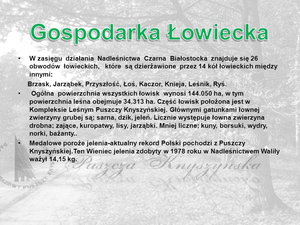 W zasięgu działania Nadleśnictwa Czarna Białostocka znajduje się 26 obwodów łowieckich, które są dzierżawione przez 14 kół łowieckich między innymi: B