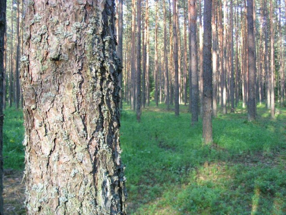W zasięgu działania Nadleśnictwa Czarna Białostocka znajduje się 26 obwodów łowieckich, które są dzierżawione przez 14 kół łowieckich między innymi: Brzask, Jarząbek, Przyszłość, Łoś, Kaczor, Knieja, Leśnik, Ryś.