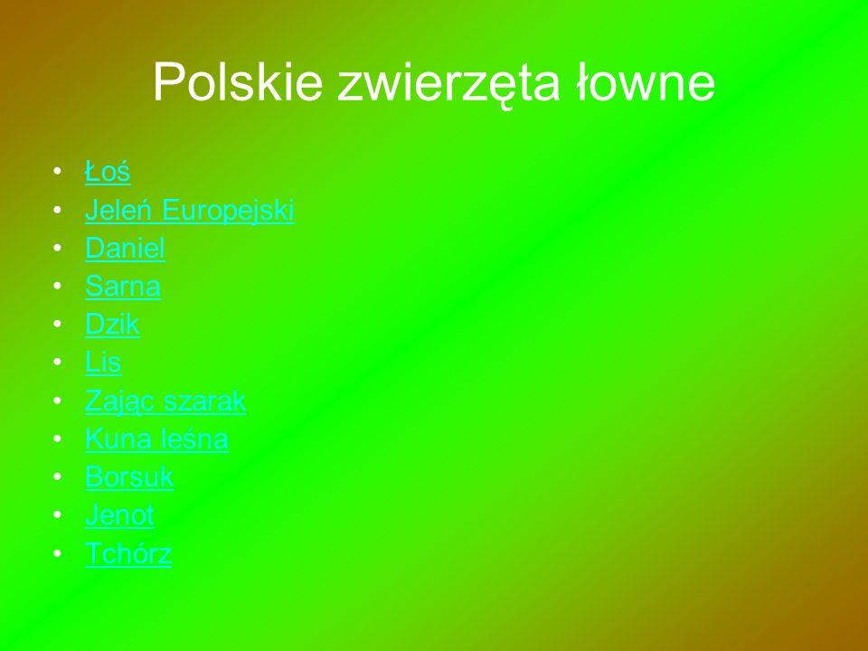 Polskie zwierzęta łowne Łoś Jeleń Europejski Daniel Sarna Dzik Lis Zając szarak Kuna leśna Borsuk Jenot Tchórz