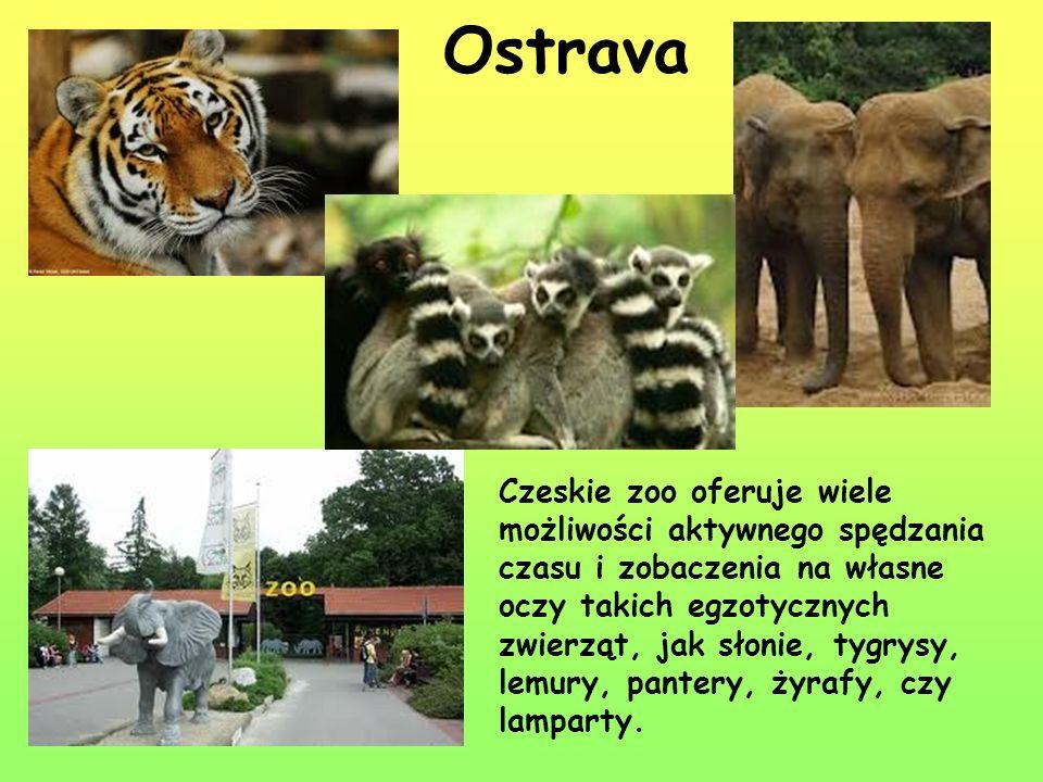 Ostrava Czeskie zoo oferuje wiele możliwości aktywnego spędzania czasu i zobaczenia na własne oczy takich egzotycznych zwierząt, jak słonie, tygrysy,