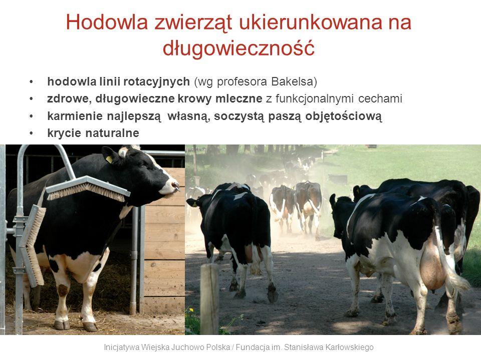 Hodowla zwierząt ukierunkowana na długowieczność hodowla linii rotacyjnych (wg profesora Bakelsa) zdrowe, długowieczne krowy mleczne z funkcjonalnymi