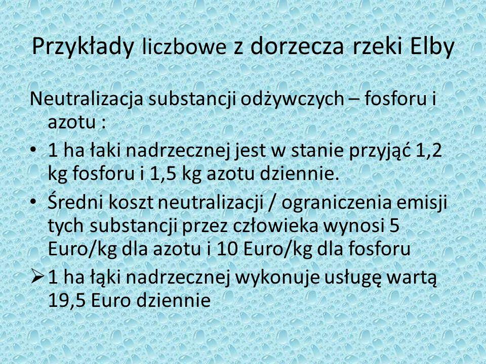 Przykłady liczbowe z dorzecza rzeki Elby Neutralizacja substancji odżywczych – fosforu i azotu : 1 ha łaki nadrzecznej jest w stanie przyjąć 1,2 kg fo