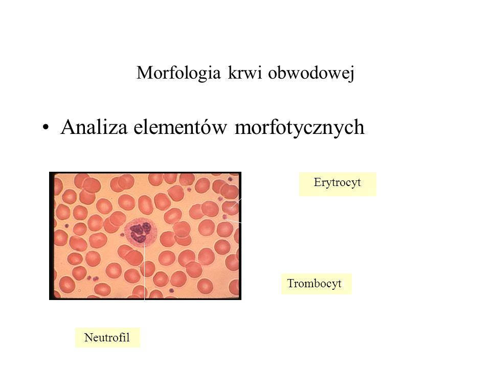 Morfologia krwi obwodowej Analiza elementów morfotycznych Erytrocyt Neutrofil Trombocytt