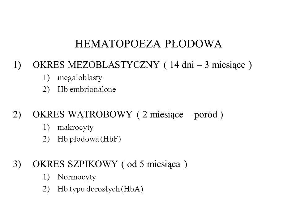 HEMATOPOEZA PŁODOWA 1)OKRES MEZOBLASTYCZNY ( 14 dni – 3 miesiące ) 1)megaloblasty 2)Hb embrionalone 2)OKRES WĄTROBOWY ( 2 miesiące – poród ) 1)makrocy