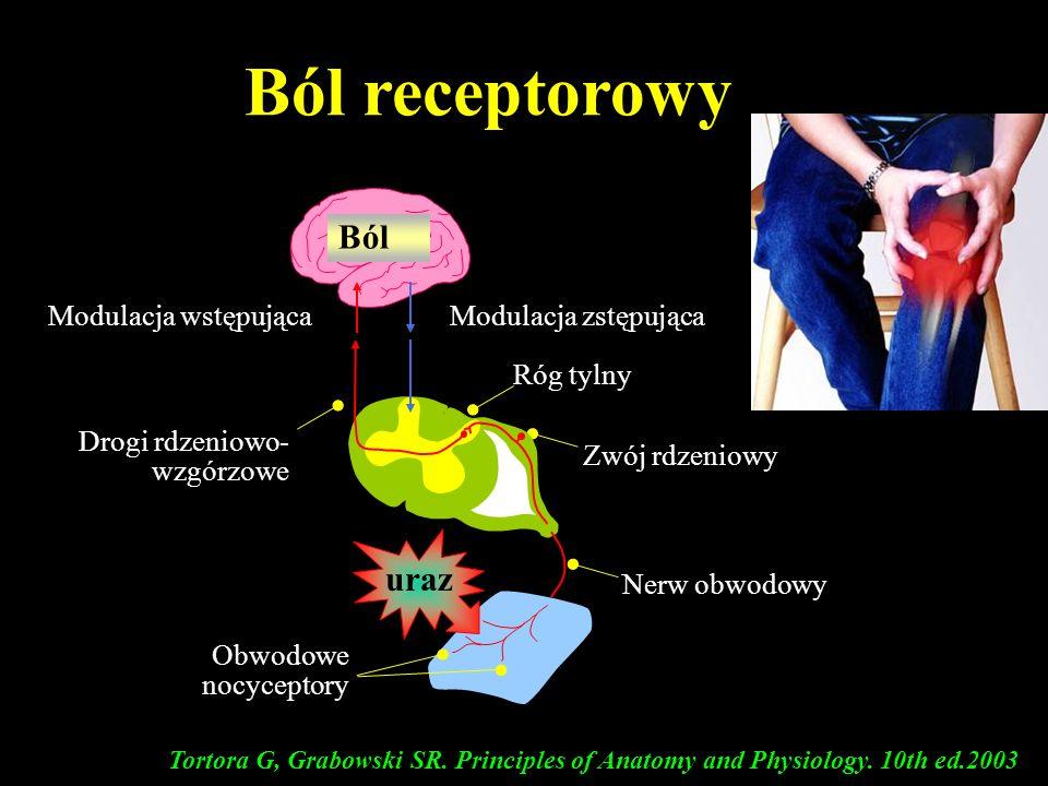 Ból receptorowy Tortora G, Grabowski SR. Principles of Anatomy and Physiology. 10th ed.2003 uraz Modulacja wstępującaModulacja zstępująca Zwój rdzenio