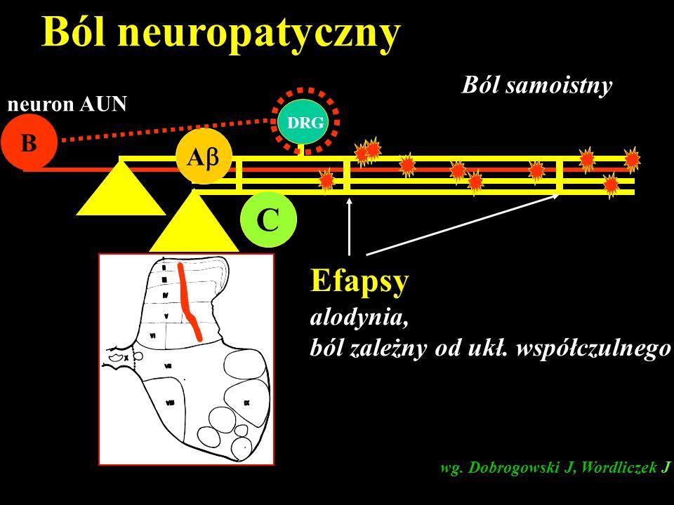 C A B neuron AUN DRG Ból samoistny Efapsy alodynia, ból zależny od ukł. współczulnego wg. Dobrogowski J, Wordliczek J Ból neuropatyczny