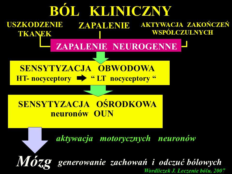 Róg przedni I II III IV V VI VII VIII IX A C kora mózgowa wzgórze Wordliczek J. Leczenie bólu, 2007