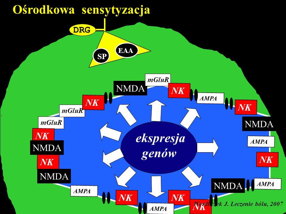 DRG Ośrodkowa sensytyzacja A C SP EAA mGluR NK AMPA NMDA ekspresja genów mGluR NK AMPA NMDA Wordliczek J. Leczenie bólu, 2007