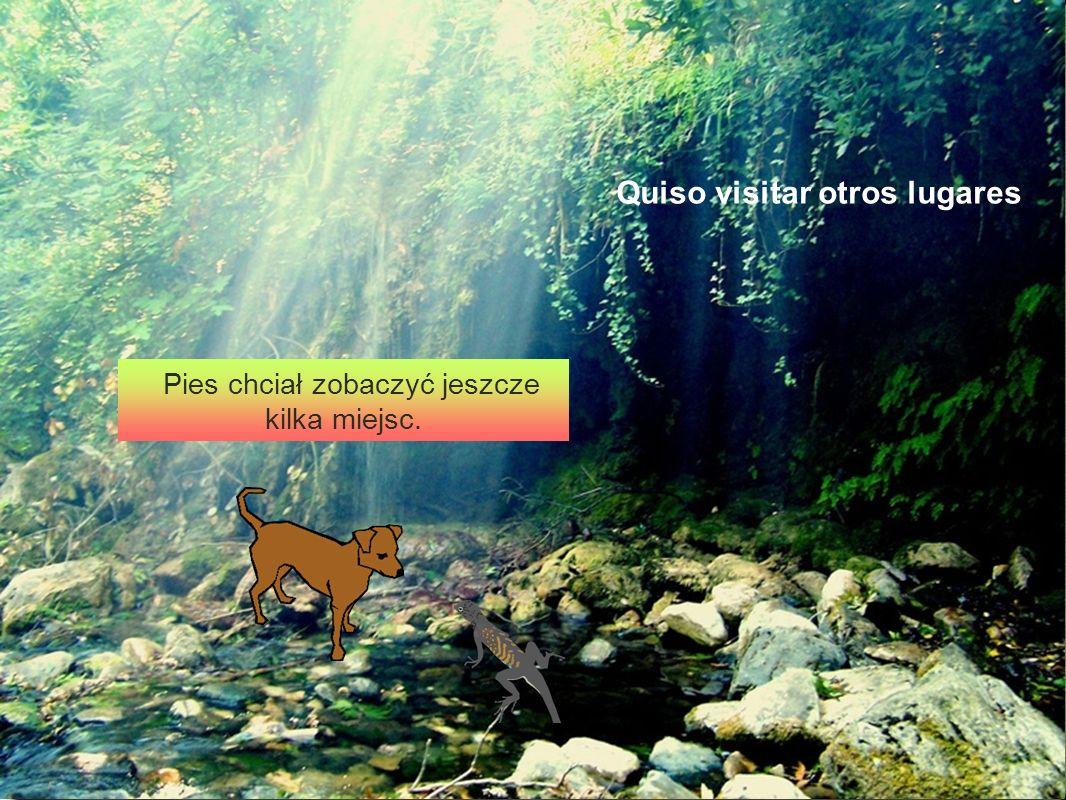 Kamienie Pies chciał zobaczyć jeszcze kilka miejsc. Quiso visitar otros lugares